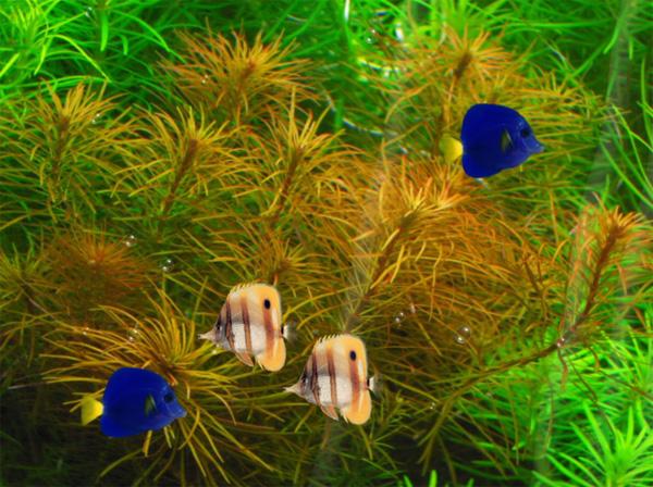 Fish Tank Animated Wallpaper