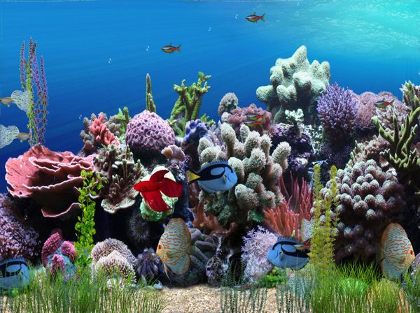 Click to view AW-Mill Aquarium Animated Wallpaper 1.0.0 screenshot