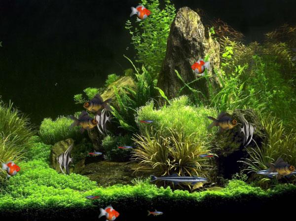 Click to view Virtual Aquarium Animated Wallpaper 1.0.0 screenshot