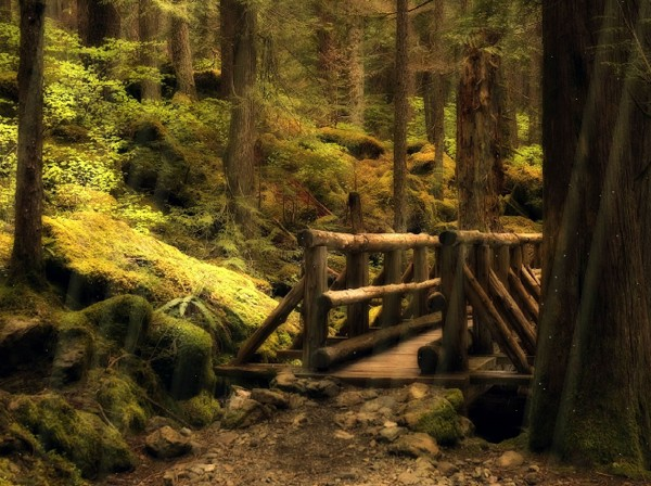Click to view Forest Bridge Animated Wallpaper 1.0.0 screenshot